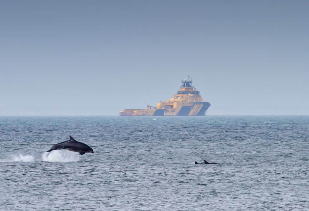 Dolphin Spotting at Aberdeen Harbour