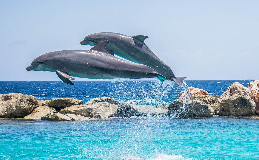 Dolphin Spoting