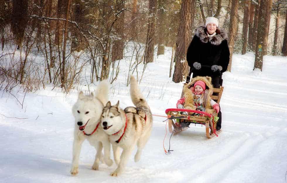 Husky Sledge Rides